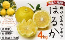<限定>「はるか」爽やか系柑橘(春のみかん)約4kg ※2021年2月上旬~2021年3月下旬発送(予定)
