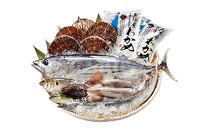 地元漁師さんと一緒に新鮮でおいしいお魚をお届けします!【唐桑漁師さんの鮮魚セットB】