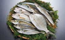 旬のおまかせ鮮魚セット