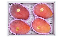 ★早期先行予約★宮古島産アップルマンゴー2kg