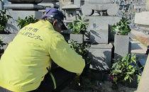 AC02お墓を代わりにお参り。お墓参り代行サービス献花・清掃付き【80P】