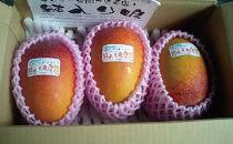 【先行予約】マンゴー「鉢入り娘」(ご家庭用1kg箱入り)