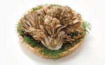 【期間限定】森の精 乾燥舞茸 40g 自然からの贈り物 山の幸