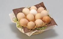 産みたて土佐ジロー卵(6ヶ入り×2パック)と高知の季節野菜セット