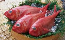 高知産 天然 金目鯛 1.3kg~1.5kg