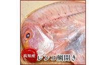 高知県産レンコ鯛開き(10尾)たい(タイ)の干物岡岩商店