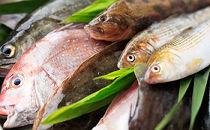燧灘のお魚お楽しみセット