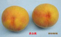 香川県三豊市産「黄金桃」(2kg)