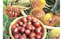宇目産生栗3㎏ 人気の秋の味覚お届けします。