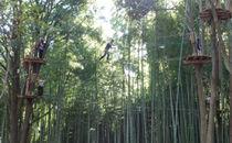 森の空中散歩!フォレストアドベンチャー・おおひら 体験チケット(上級コース)