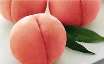 【期間限定】川中島白桃3.2kg