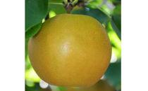 梨(豊水)