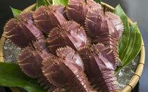 日本唯一「以西底びき網漁」の活ウチワエビ