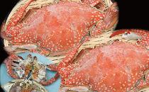 濃厚な味「豊前海産活渡り蟹塩茹で」特大メス2匹