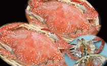 濃厚な味「豊前海産活渡り蟹塩茹で」大メス2匹