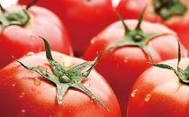 ★受付終了★2019年予約開始‼特別栽培トマト・4kg【村政ファーム】