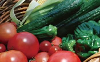 旬の野菜BOX