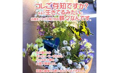 ソーラーバタフライ(モンシロチョウ+色付き蝶々)