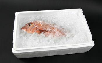 紀州梅まだい(鮮魚)