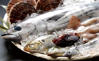 地元漁師さんと一緒に新鮮でおいしいお魚をお届けします!【唐桑漁師さんの鮮魚セットA】