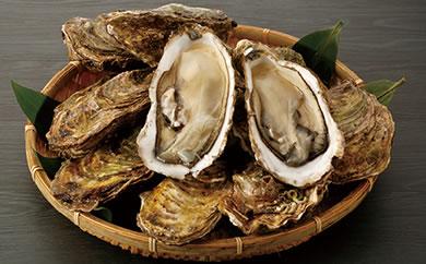 大粒の身と甘味がバツグン! 唐桑産もまれ牡蠣セット(殻付き/加熱用)