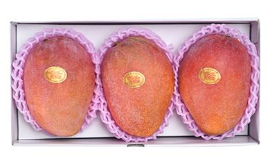 宮古島産アップルマンゴー1kg
