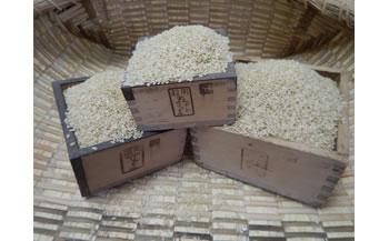 厳選いずみ米(玄米30kg)