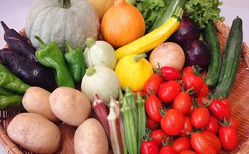 季節の彩り野菜セットA(株式会社 雲の上ガーデン)