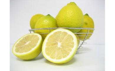 観音山レモン3kg