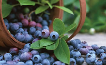 カルストの雫 冷凍ブルーベリー