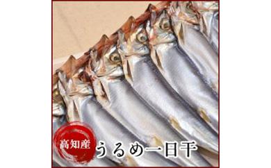 うるめいわしの一日干(ひいといぼし)(10串) 高知県産 岡岩商店