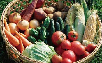 ◆取れたて野菜&特産品