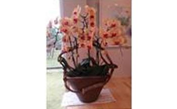 胡蝶蘭寄せ植え鉢A