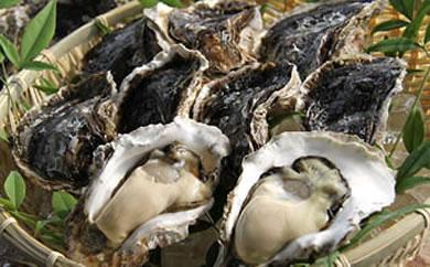 蒲江産岩牡蠣(殻付き一粒牡蠣)200~250gサイズ20個入り