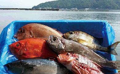 旬の天然魚満載こだわり鮮魚ボックス