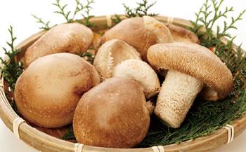 栃木県真岡市産 生椎茸(大)菌床栽培