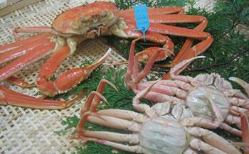 石川県産加能かに(ずわい蟹)・香箱かに詰合せ(計3匹)