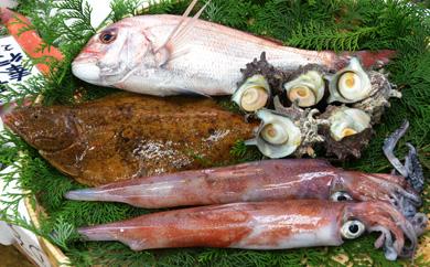 長崎で水揚げされた新鮮セット!新鮮サザエと白身魚と旬の鮮魚詰合せ