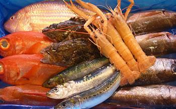 天然鮮魚セット 沼津港 朝獲れ鮮魚4㎏程度