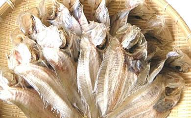 尾道名物でべら(大サイズ)15尾 干物